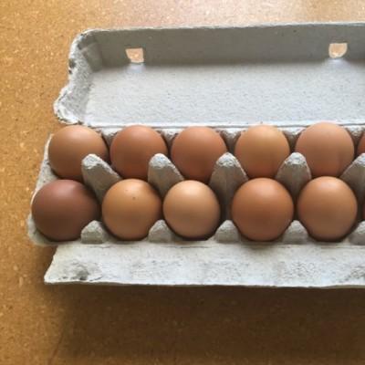 Aotearoa Free Range eggs Ltd